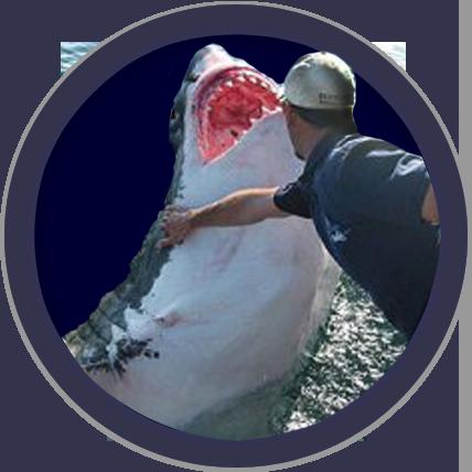 Shark Lover